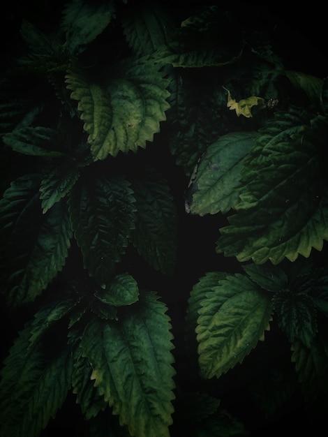 Hoge hoek verticale close-up shot van groene bladeren groeien in het midden van een tuin Gratis Foto