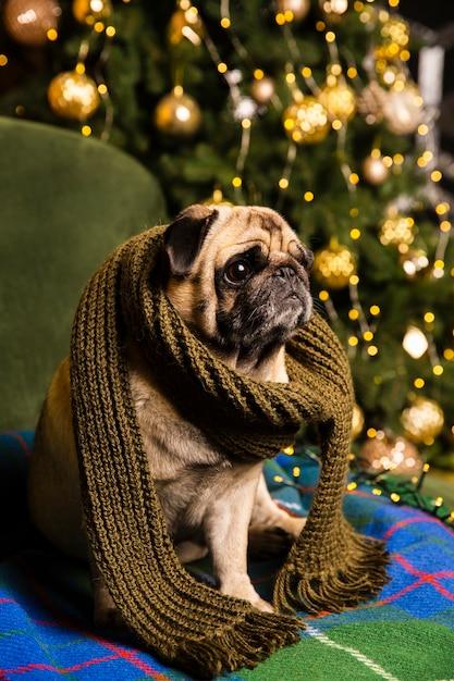 Hoge hoekhond met sjaal naast kerstboom Gratis Foto