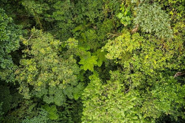 Hoge hoekmening van boomtakken in regenwoud in costa rica Premium Foto