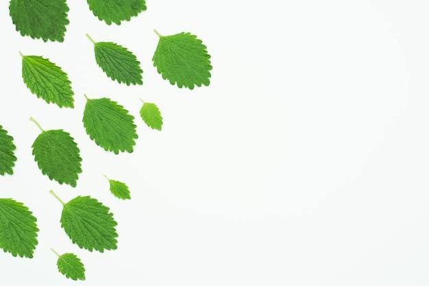 Hoge hoekmening van de groene bladeren van de citroenbalsem over witte achtergrond Gratis Foto