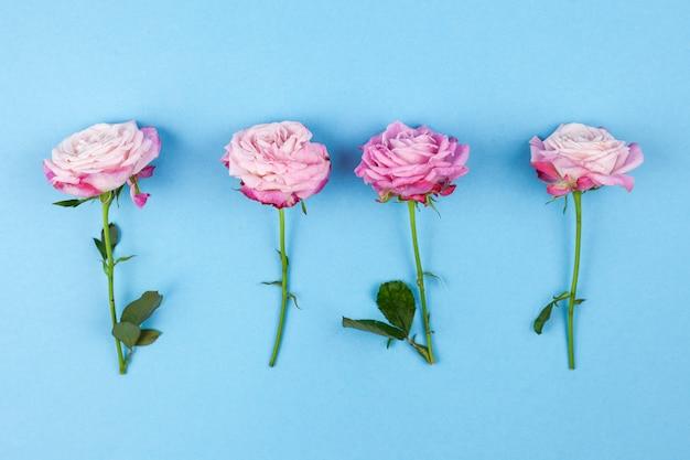 Hoge hoekmening van roze rozen die op gekleurde achtergrond worden geschikt Gratis Foto