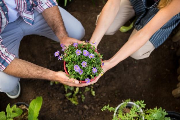Hoge hoekmening van tuinlieden die potplanten houden bij tuin Premium Foto