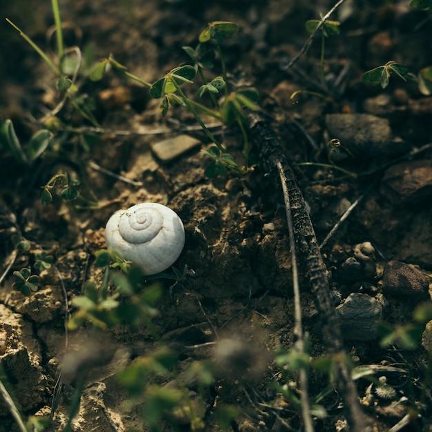 Hoge hoekmening van witte slak op rots Gratis Foto