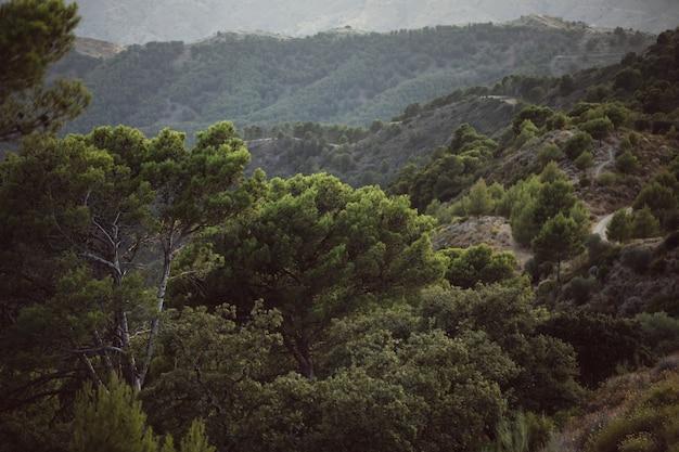 Hoge mening van mooi landschap met bergen en bomen Gratis Foto