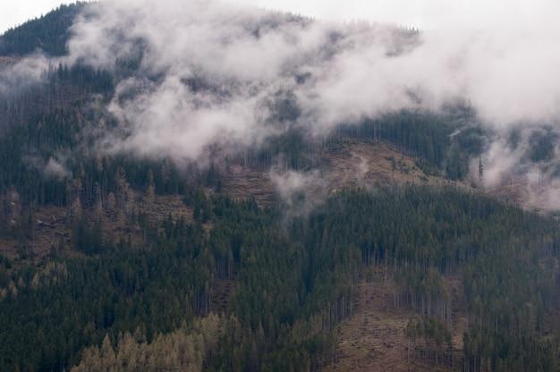 Hoge tatras-bergen in polen in het regenachtige mistige weer Premium Foto