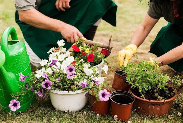 Hoger paar dat de bloemen geeft Gratis Foto