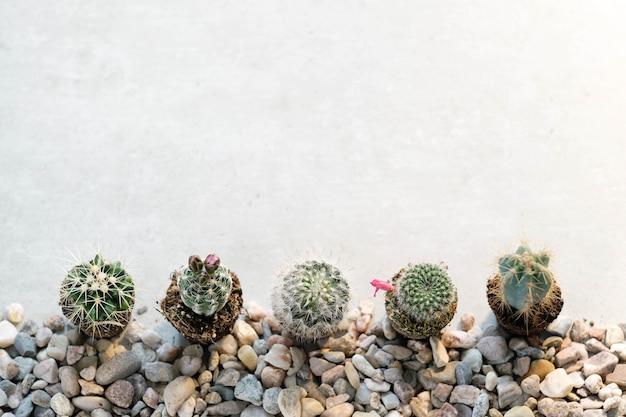 Home cactussen op tafel Gratis Foto