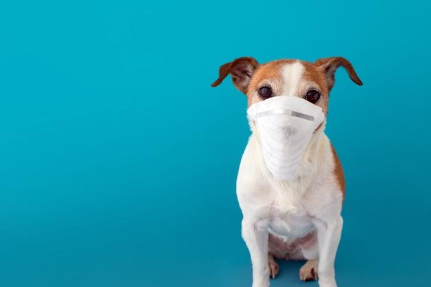 Hond die een medisch gezichtsmasker draagt om zichzelf te beschermen tegen infectie Premium Foto