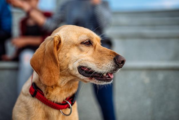 Hond en familie buiten genieten van Premium Foto