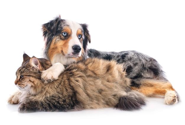 Hond en kat Premium Foto