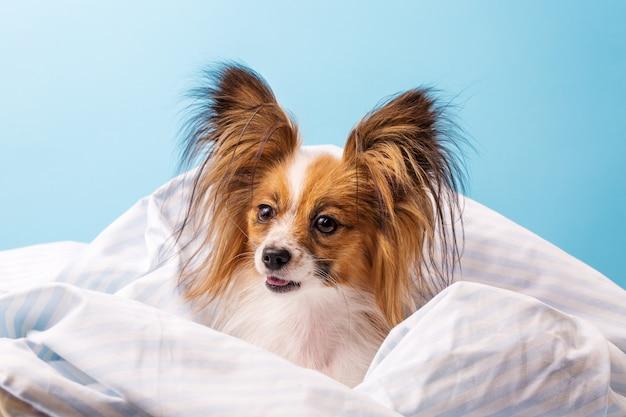 Hond in bed gewikkeld Premium Foto