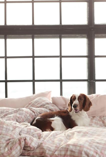 Hond in bed in de ochtend Gratis Foto