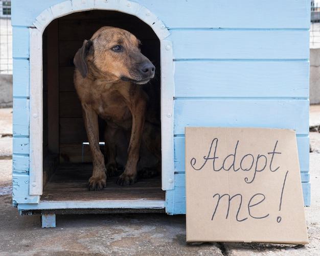 Hond in huis met adopteer me teken buiten Gratis Foto