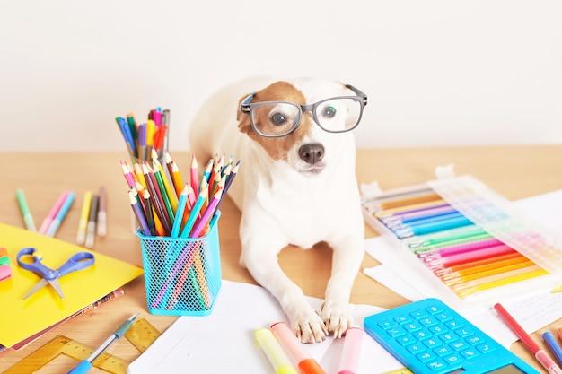 Hond jack russell terriër op een tafel in de buurt van schoolbenodigdheden Premium Foto