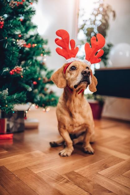 Hond met geweien zittend op de vloer Premium Foto