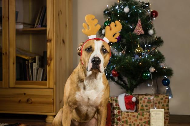 Hond met rudolf de rendieren hoed zit voor versierde bont boom en verpakt kerstcadeautjes Premium Foto