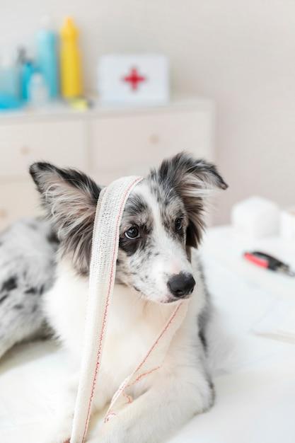 Hond met verbandzitting op lijst Gratis Foto