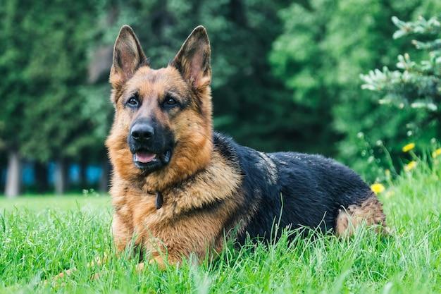 Hond op het gras   Premium Foto