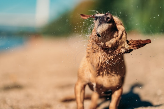 Hondenzwembaden voor Cool zomerplezier!
