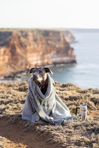 Hond wordt bedekt met een deken Gratis Foto