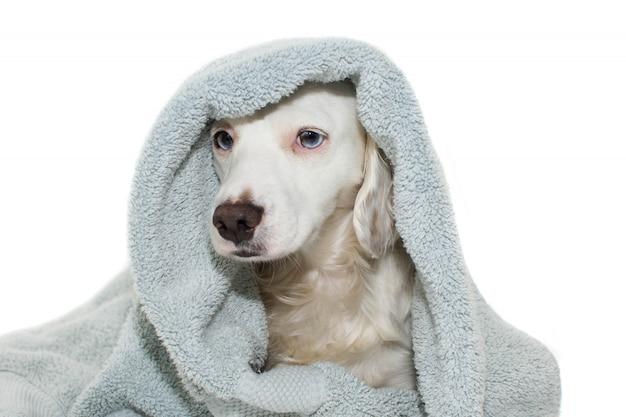 Honden baden Premium Foto