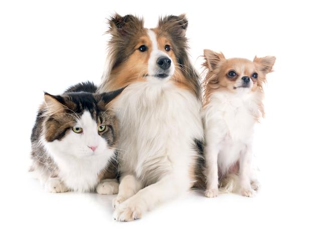 Honden en kat Premium Foto