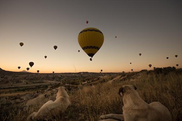 Honden genieten van het prachtige uitzicht op hete ballonnen in de lucht tijdens zonsondergang in cappadocië, turkije Gratis Foto