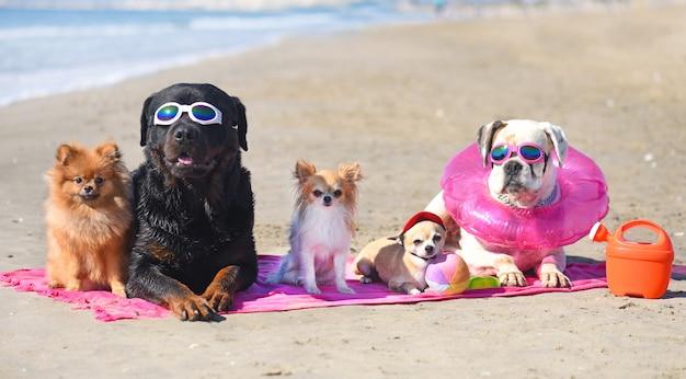 Honden op het strand Premium Foto