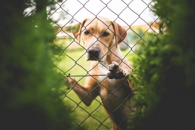 Afbeeldingsresultaat voor hond hek freepik