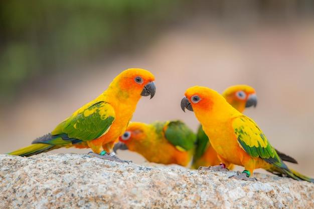 Honds papegaai en schattige vogel Premium Foto