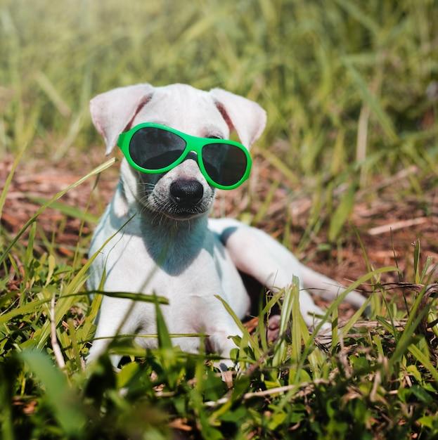 Hondvriend het leuke honds glimlachen Gratis Foto