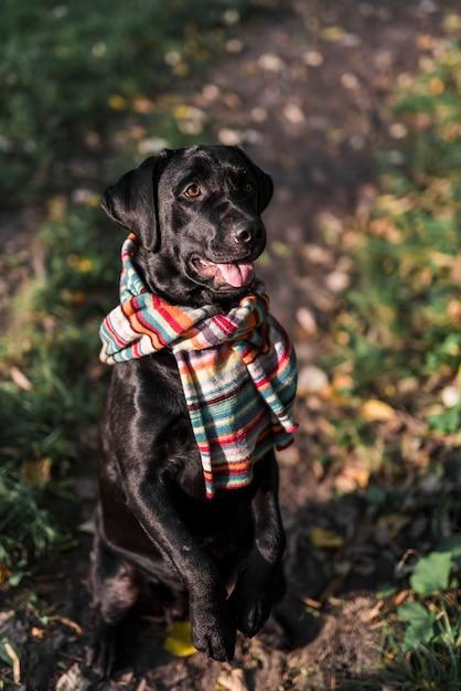 Hondzitting in park die kleurrijke sjaal dragen Gratis Foto