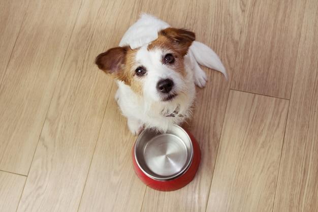 Hongerig hondenvoer met een rode lege kom. hoge kijkhoek. Premium Foto