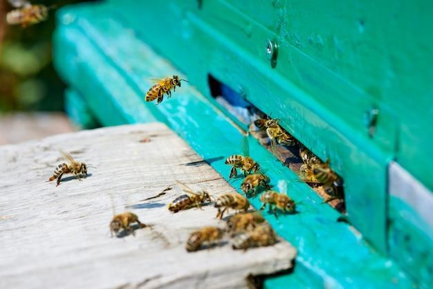 Honingbij vliegt naar een houten bijenkorf. Premium Foto
