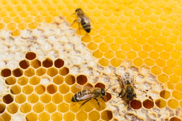 Honingraat met bijen Gratis Foto