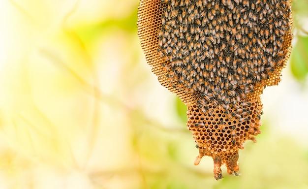 Honingraat op boomaard en zwermhoningbij op kambijenkorf Premium Foto