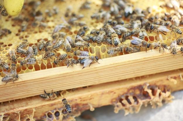 Honingraatframe opgezet door bijen, met gebrek aan ruimte voor honing Premium Foto