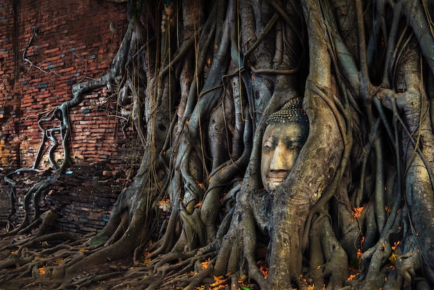 Hoofd van boedha in de boomwortels bij wat mahathat ayuthaya, thailand. Premium Foto