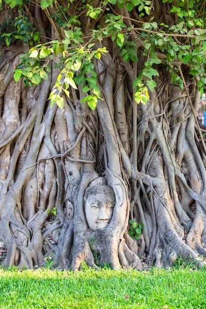 Hoofd van het standbeeld van boedha in de boomwortels in wat mahathat in ayutthaya-provincie, thailand Premium Foto