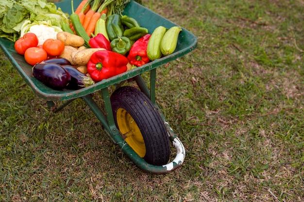 Hoog hoekassortiment van groenten in kruiwagen Gratis Foto
