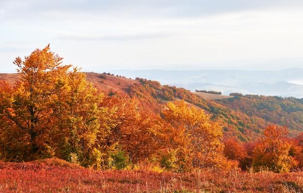 Hooglandvegetatie bescheiden zomer en ongewoon mooie kleuren bloeien in de herfst, vóór koud weer. bosbessen helderrood, naaldbosgroen, oranje bukbergen sinie- fantastische charme. Gratis Foto