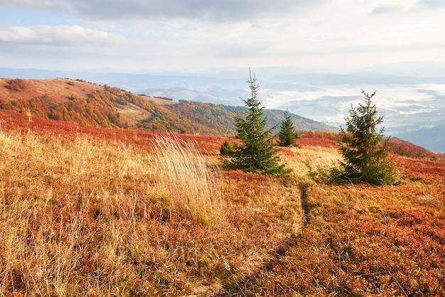 Hooglandvegetatie bescheiden zomer en ongewoon mooie kleuren bloeien in de herfst, vóór koud weer. bosbessen helderrood, naaldbosgroen, oranje bukbergen sinie- fantastische charme. Premium Foto