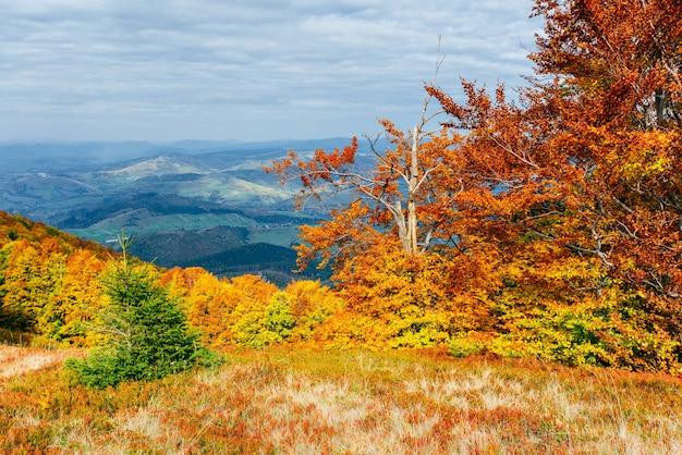 Hooglandvegetatie bescheiden zomer en ongewoon mooie kleuren bloeien in de herfst Premium Foto