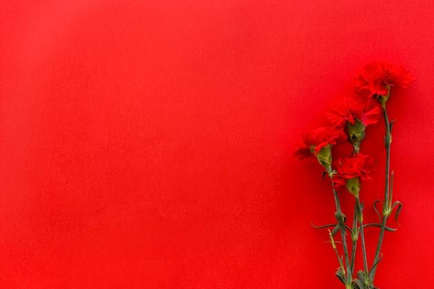 Hoogste mening van anjerbloemen tegen heldere rode achtergrond met exemplaarruimte Gratis Foto