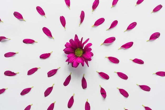 Hoogste mening van bloemen en bloemblaadjes Gratis Foto