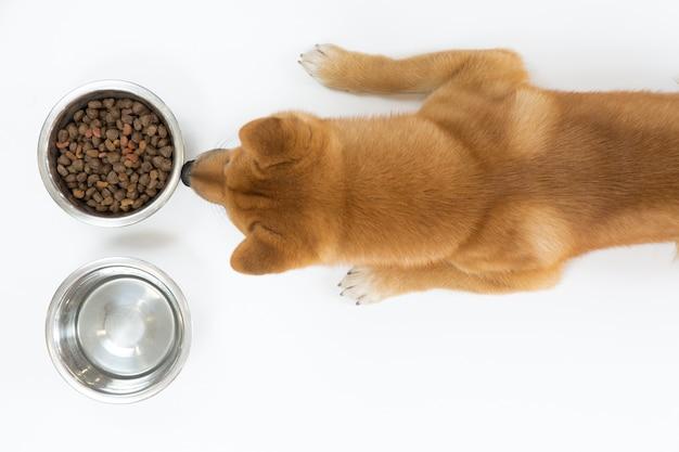 Hoogste mening van droog hondevoer in kom en rode shiba-inuhond die en eten kijken wachten Premium Foto