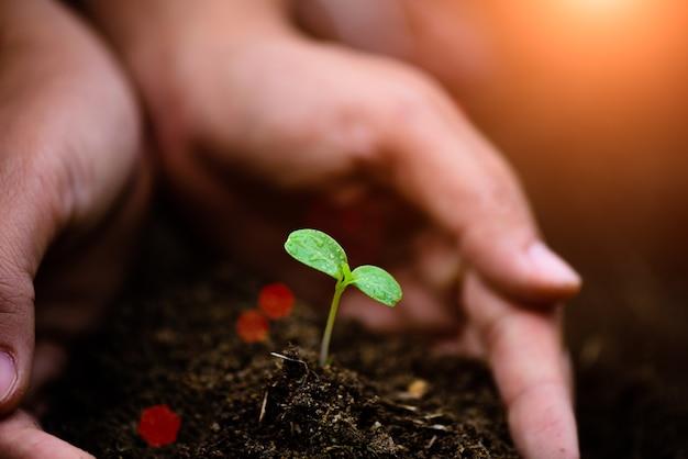 Hoogste mening van jonge boom met grond op achtergrond. Premium Foto