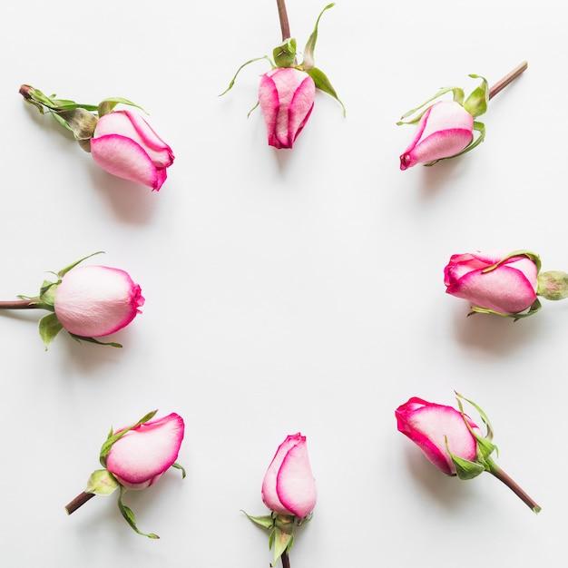Hoogste mening van roze rozen Gratis Foto