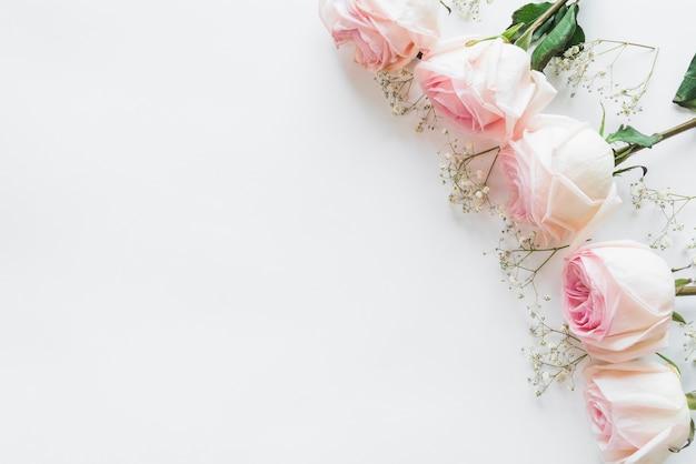 Hoogste mening van witte rozen Gratis Foto