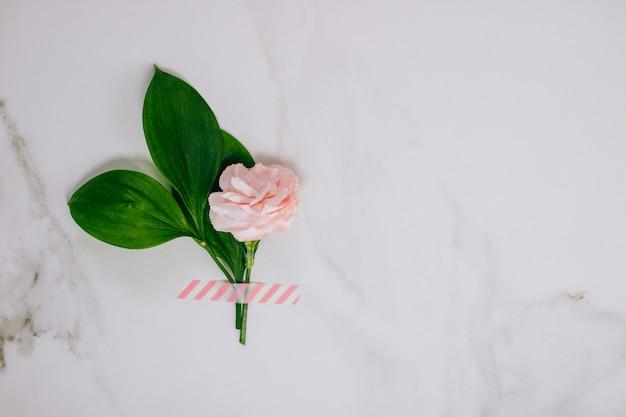 Hoogste menings roze anjer en op marmeren achtergrond. Premium Foto